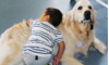 nepean_therapy_dogs_100x60.JPG